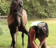 Important things to consider when choosing the best shoes for your horse
